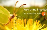 """""""Planet e"""": Welt ohne Insekten"""